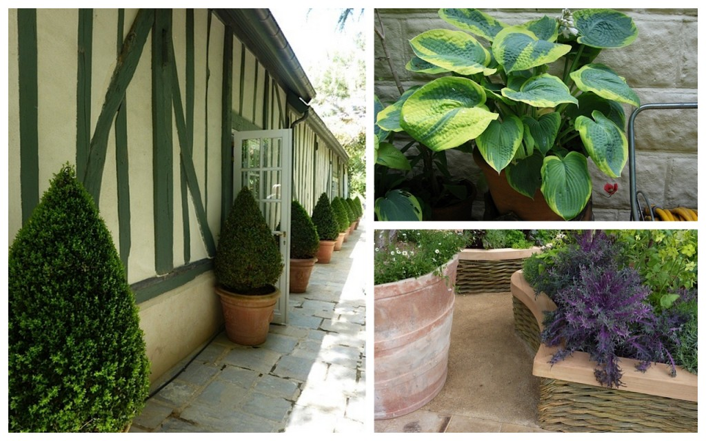 buxus topiary,hosta and raised bed planting