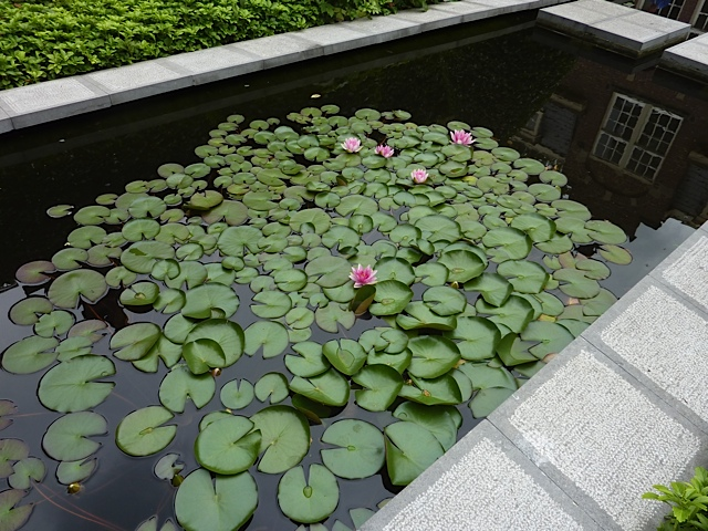 formal pond with waterlilies in garden