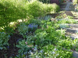 Garden Borders The Enduring Gardener