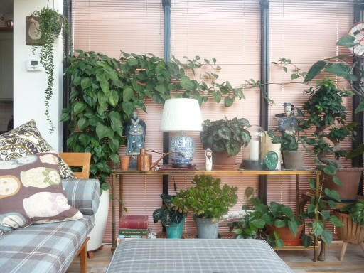 House plants looking healthy in a conservatory