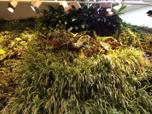 looking up at the living wall from ground floor