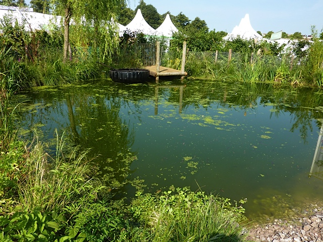 natural pond with shallow sloping slides and planting
