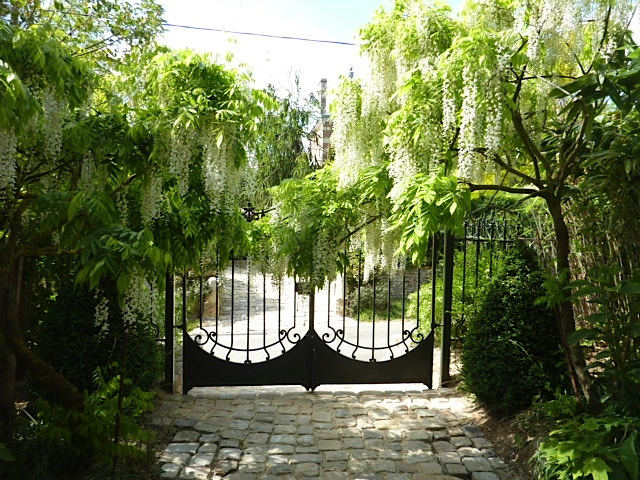 distant gat as viewed down a pathway with wisteria hanging