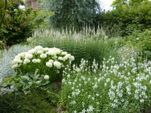 drifts of white and green plants in garden border
