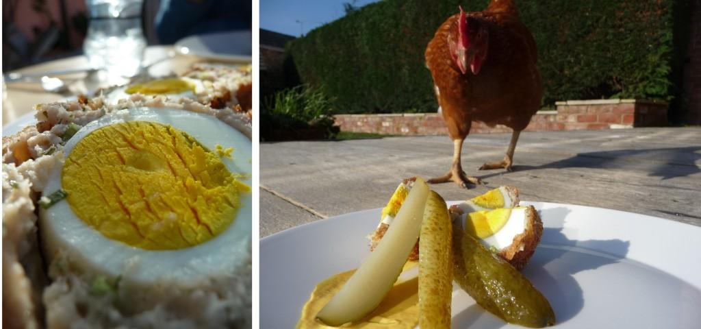 chicken meeting a scotch egg