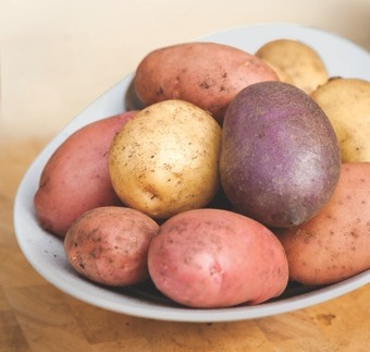 the blight resistant sarpo potatoes