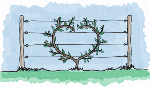 Heart shaped espalier
