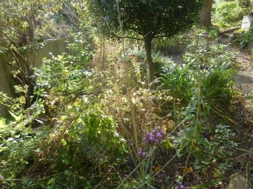 unkempt garden