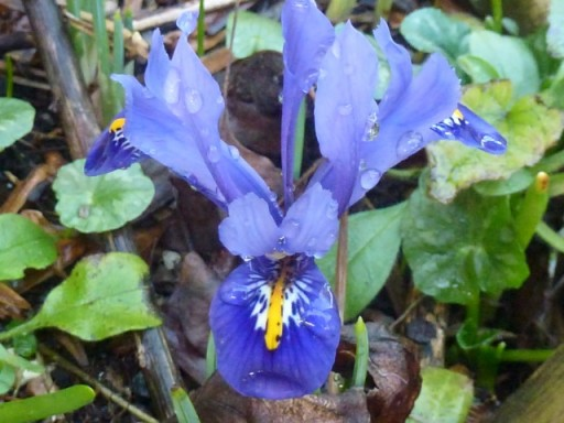 birds eye view of iris flower