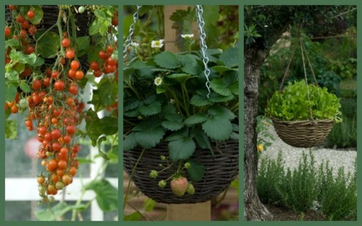 hanging baskets full of edible plants