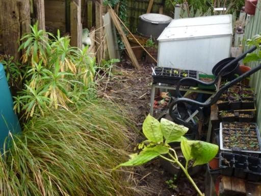 a neglected garden