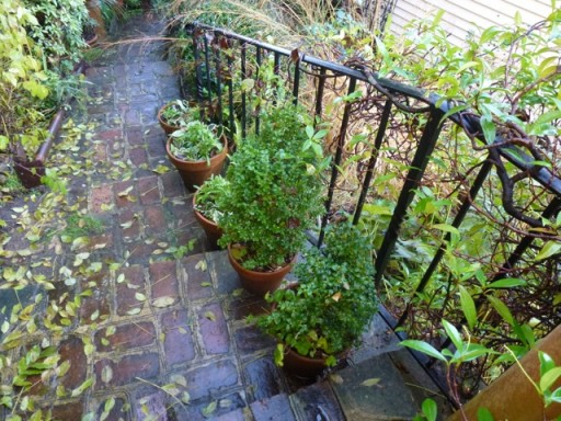 plant pots line a stairway