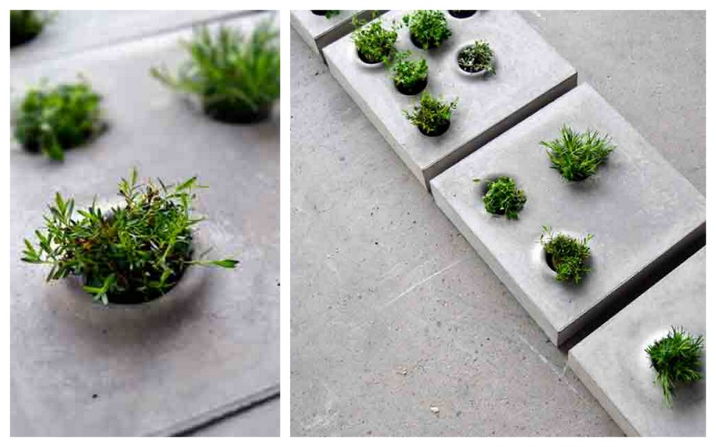 vibrant green plants highlighted against grey concrete