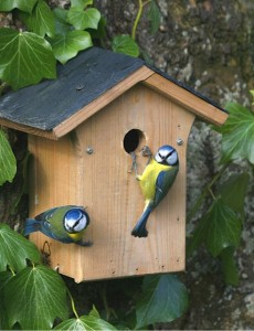 blue tits entering a nesting box