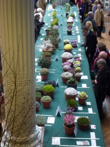 apline plants on display at rhs show