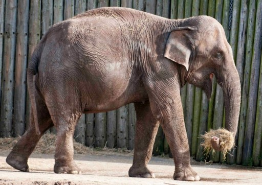 elephant at blackpool zoo