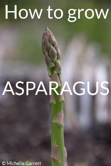 asparagusgrowing guide