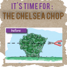 chelsea-chop