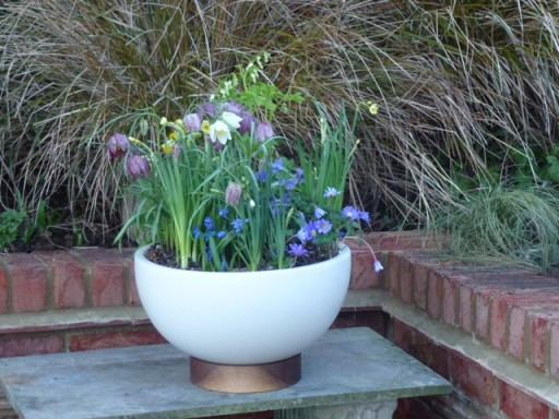 modernica bowl planted up with spring flowers