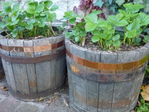 C mo exterminar babosas y caracoles del jard n for Caracoles de jardin como eliminarlos