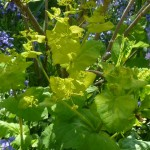 vibrant green plant