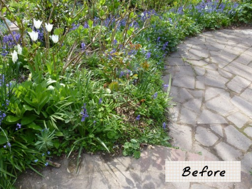 garden path before being landscaped