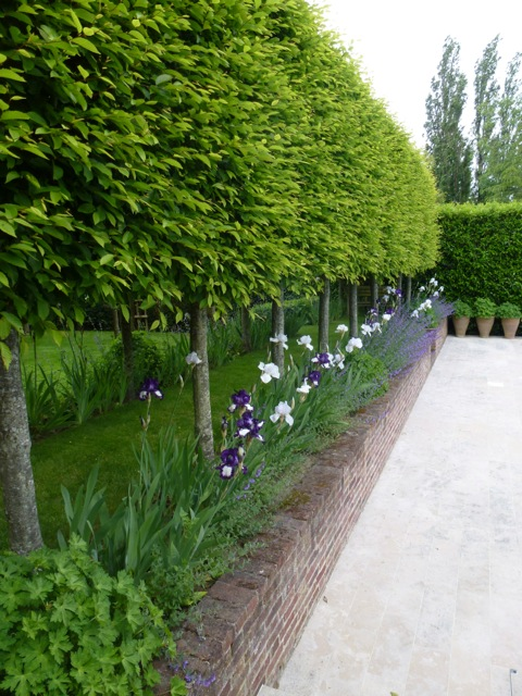 hornbeams neatly pleached