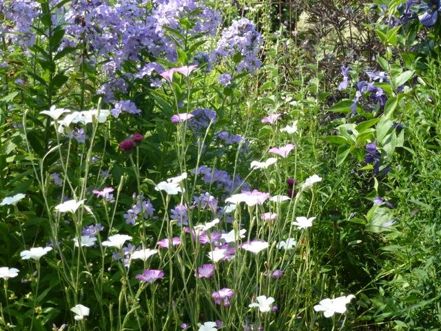 fabulous herbaceous planting