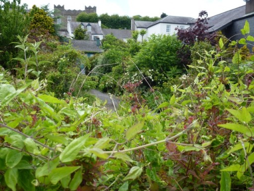 another view of mature garden in Kinsale