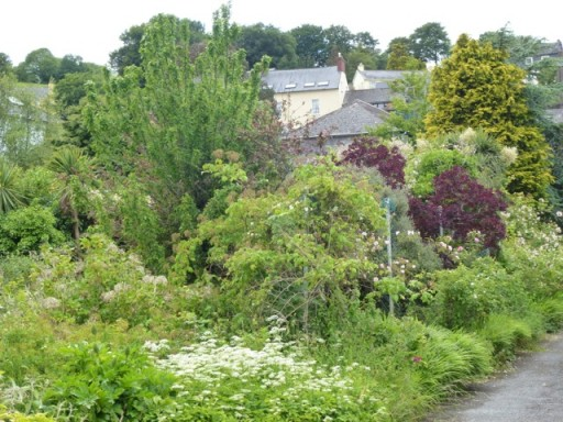 well established garden in Kinsale