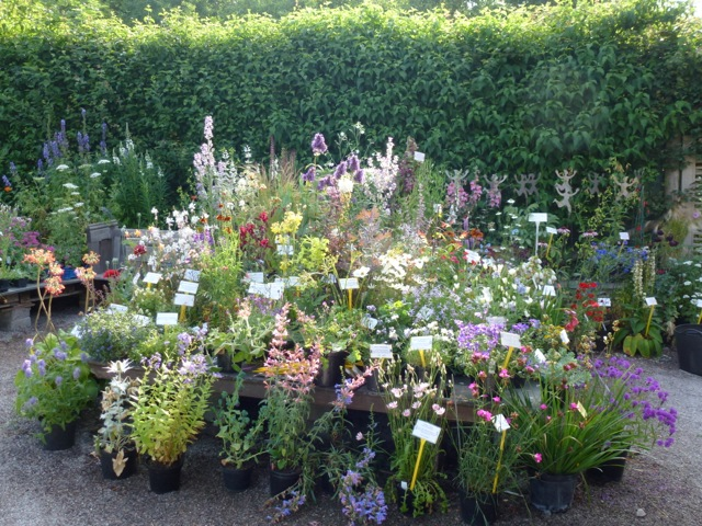 plants for sale on a stand in the garden