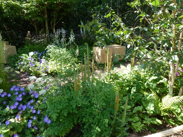 woodland planting in this garden at Hampton Court Show
