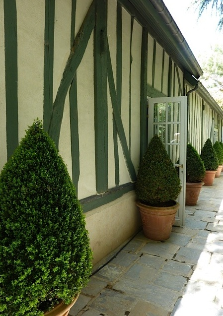consistent planting of buxus in courtyard garden