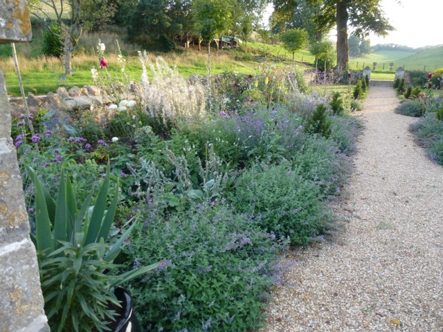 looking down the garden border