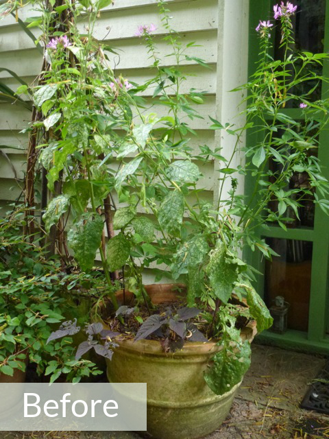 garden pot before makeover