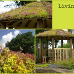 A Living Roof