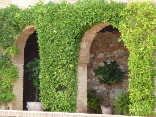 garden arches frame potted plants