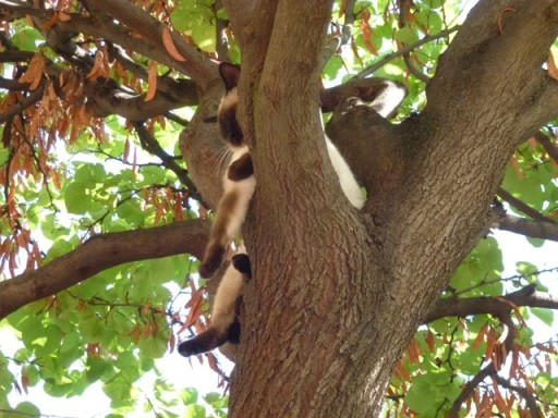 cat lazes in tree.