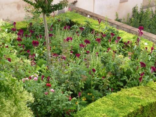 Purple Celosia, lemon basil and roses