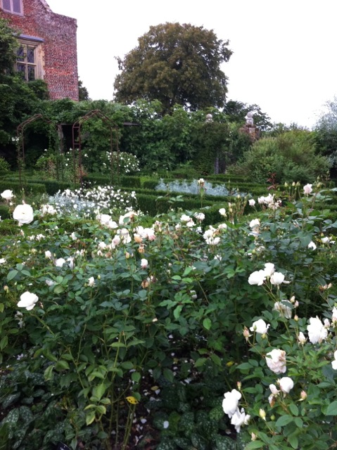 the roses in flower at sissinghurst