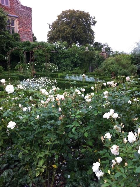 the roses in flower at sissinghurst