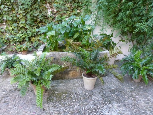 garden pots on cobbled path in courtyard