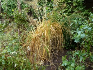 deciduous grass in need of tidying up