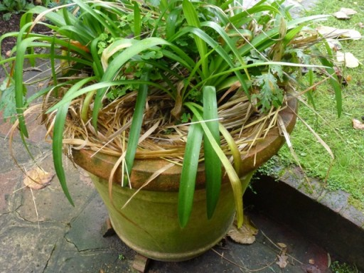 dried grass insulates top of plant pot from frost