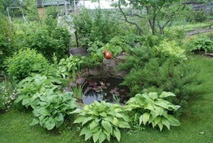 samll garden pond surrounded by hostas