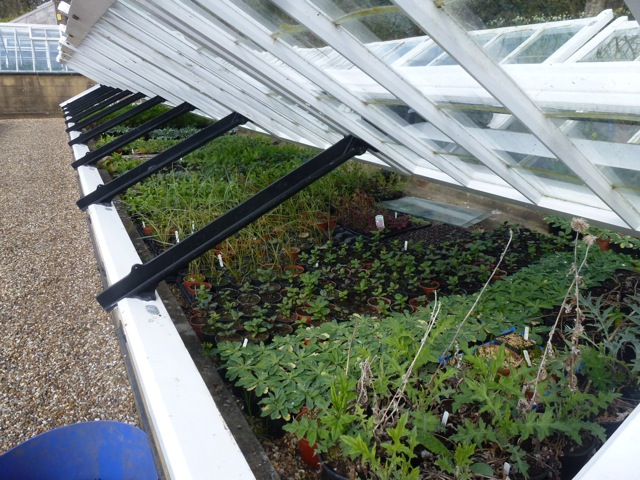 plants under the protection of a coldframe