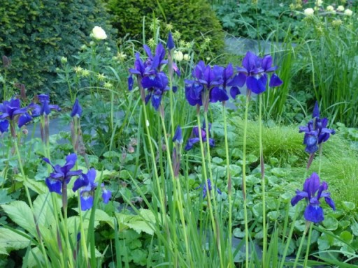 Perfect timing the Iris out for Chelsea