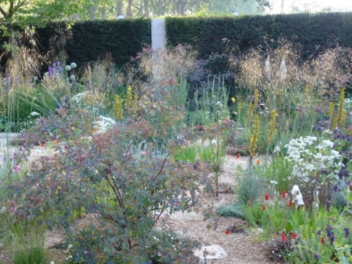 airy plants on Cleve Wests garden at Chelsea