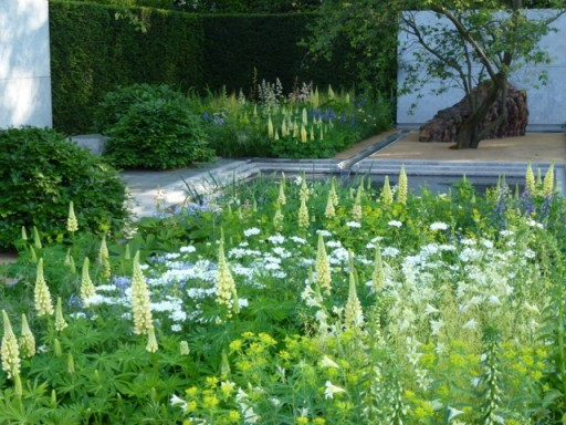 subtle yellow lupins in mixed border at Chelsea 2014