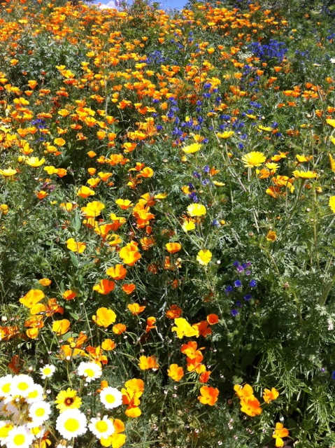 Bright yellow and orange flowers worship the sun